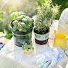 Corso di giardinaggio e spazi verdi