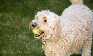 Up to 48% Off Doggy Day Care at All Heart Pet Care Center at All Heart Pet Care Center, plus 6.0% Cash Back from Ebates.