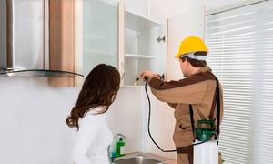 Ideal Servicios: 1, 2 o 3 aplicaciones de fumigación y control de plagas en interiores de hasta 150 m² desde 64,95 € con Ideal Servicios