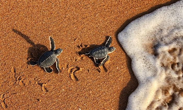 Afbeeldingsresultaat voor Ra as al hadd turtle