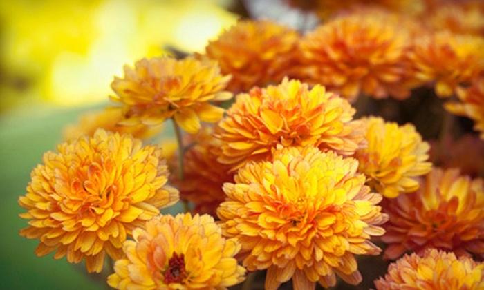 Ingrid's Secret Garden - Cranberry Lake: $20 Worth of Flowers & Gardening Accessories