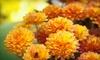 Ingrid's Secret Garden LLC. - Cranberry Lake: $20 Worth of Flowers & Gardening Accessories