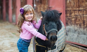 Old Town Riding School: Pony Experience for One or Two at Old Town Riding School (Up to 53% Off)