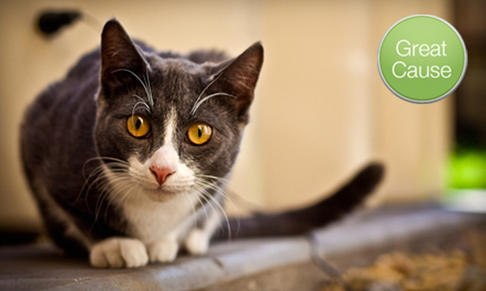 Forgotten Cats - Philadelphia: If 30 People Donate $10, Then Forgotten Cats Can Sterilize, Vaccinate, and Provide Flea Treatments for Six Feral Cats