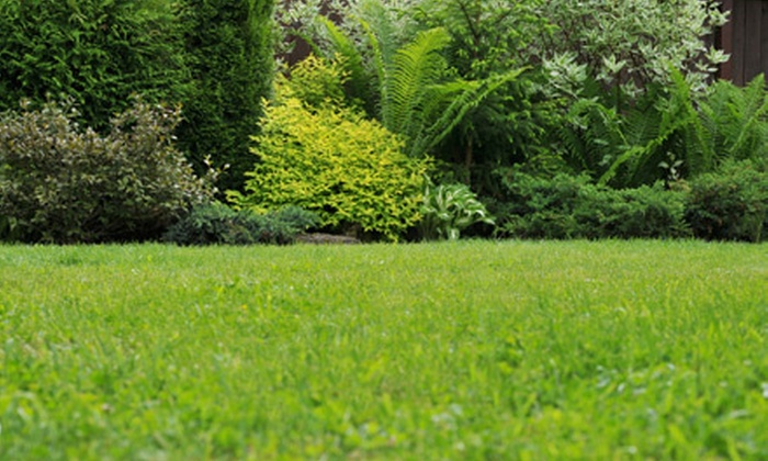 Greenwise - Chicago: Lawn Aeration, Seeding, or Both on Up to 6,000 Square Feet from Greenwise (Up to 60% Off)