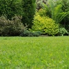 Up to 60% Off Lawn Aeration and Seeding