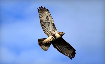 Fennessey Ranch: Hawk Watch Birding Tour on Sept. 24 from 7:30AM-3:00PM - Fennessey Ranch in Bayside
