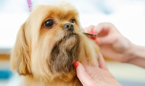 The Grooming Lodge: Doggy Wash, Blow and Go Experience for Small, Medium and Large Dogs at the Grooming Lodge