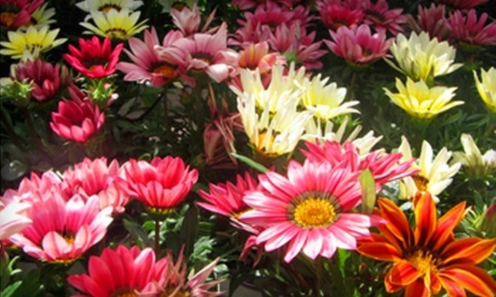 Tyler's Landscaping - Rockford: $20 for $40 Worth of Flowers, Shrubs, and Other Plants at Tyler's Landscaping