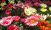Tyler's Landscaping Services Inc. - Rockford: $20 for $40 Worth of Flowers, Shrubs, and Other Plants at Tyler's Landscaping