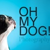 """OH MY DOG! Photography - Encinitas: $40 for an In-Studio Pet Photo Shoot and 8""""x10"""" Print from Oh My Dog! Photography ($89 Value)"""