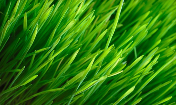 Green Turf Management - Knoxville: Two, Four, or Eight Half-Acre Lawn-Mowing Sessions from Green Turf Management (Up to 75% Off)