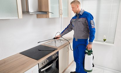 Pest Control for Two- (From $69), Three- (From $79) or Four-Bedroom House (From $99) with Carpet NZ (From $150 Value)