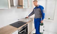 Pest Control in One Room in a Flat or House from R299 with Platinum Pest Control (Up to 34% Off)
