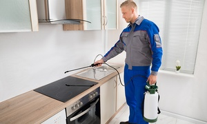 Platinum Pest Control : Pest Control in One Room in a Flat or House from R299 with Platinum Pest Control (Up to 34% Off)