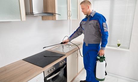1, 2 o 3 servicios de fumigación de cucarachas u hormigas en interiores de hasta 150 m² desde 64,90€ con Fumigaciones 5H