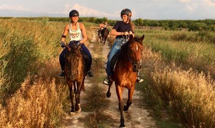 Excursión a caballo por el parque de Alcudia para 1 o 2 personas desde 24,95€ en Hípica Formentor