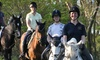 Contessa Riding Centre - Nr Ware: Six-Day Introduction Horse Riding Course for One, Two or Four at Contessa Riding Centre (Up to 32% Off)