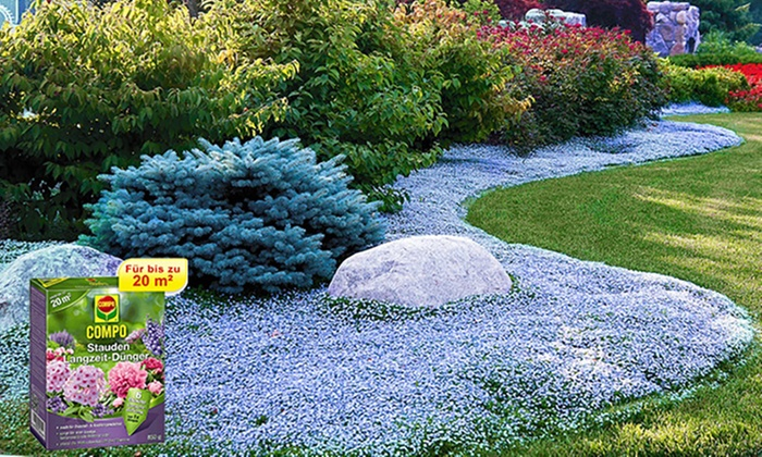 Trittfeste Bodendecker Pflanzen Groupon Goods