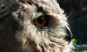 Zoológico El Bosque: Entrada al Zoológico El Bosque para adultos y niños desde 6 €
