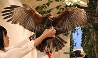 【25%OFF】タカ・フクロウと一緒に楽しめる≪フクロウカフェ(1ドリンク)+鷹匠体験 2フライト≫ @フクロウのお庭