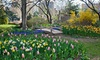 Queens Botanical Garden - Queensboro Hill: One-Year Individual or Family Membership or One-Hour Photo Session at Queens Botanical Garden (Up to 55% Off)