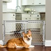 """Carlson Pet Products 23"""" Expandable Gate"""
