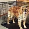 Carlson Black Wire Dog Crates