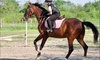 30-Minute Horse Riding Lesson