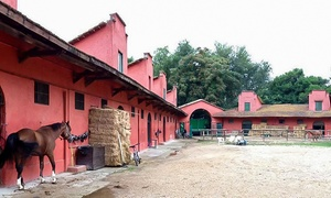 SS Lazio Equitazione Villa Glori: 3 o 5 lezioni di equitazione per 1 persone in zona Parioli da SS Lazio Equitazione Villa Glori (sconto 60%)