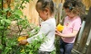 Elm Tree Preschool - Old North Boulder: $227 for Two Weeks of Camp ($405 Value) — Elm Tree Preschool