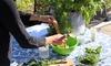 Salad Seedsheet Garden Includes 8 Varieties of Greens with Container