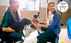 Recanto das Patas: Recanto das Patas – Santo André: 1, 3 ou 5 diárias em hotelzinho para cães ou 1 mês de creche