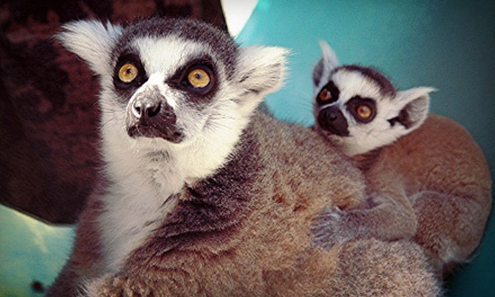 Suncoast Primate Sanctuary - Palm Harbor: Monkey-Feeding Experience for Four at Suncoast Primate Sanctuary in Palm Harbor (Up to 51% Off)