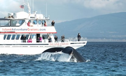 54% Off Whale Watching Tour at Island Adventures Whale Watching