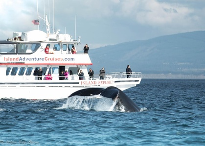 $58 for 7.5-Hour Guaranteed Whale Watching Tour Valid April 6–Sept 30 at Island Adventures ($129 Value)