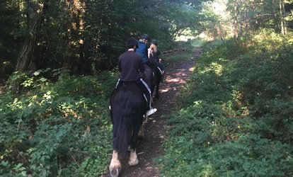 image for 90-Minute Riding Adventure for One or Two at Wicklow Equitours