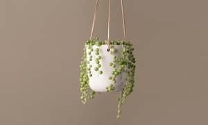 String of Pearls Potted Plant with Optional Hanging Ceramic Planter