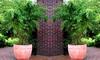 3x oder 6x Bambus Fargesia Rufa