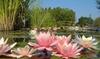 Le parc des Jardins Aquatiques