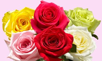 Up to 50% Off Fresh Flower Delivery from Global Rose