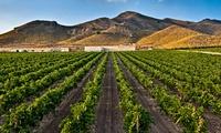 Visita guiada a las bodegas para 2, 4 o 6 con tapa y cata vinos y botella de vino desde 12,95 € en Hacienda del Carche