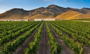 Hacienda del Carche: Visita guiada a las bodegas para 2, 4 o 6 con tapa y cata vinos y botella de vino desde 12,95 € en Hacienda del Carche