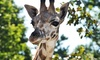 Bowmanville Zoo - Bowmanville: Single-Day Admission for One Person or Family to Bowmanville Zoo (Up to 50% Off)