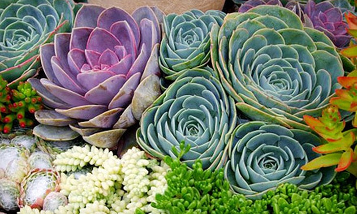 Cottage Gardens of Petaluma - Petaluma: $25 for $50 Worth of Plants and Gardening Accessories at Cottage Gardens of Petaluma