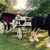 Up to 49% Off Horse-Drawn Carriage Ride