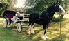 Up to 48% Off Horse-Drawn Carriage Ride