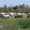Découverte des Marais du Vigueirat
