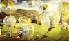 The Ball Hive - Fort Wayne: 30 Minutes of Indoor Zorbing for One, Two, or Seven-Session Play Card The Ball Hive (Up to 51% Off)