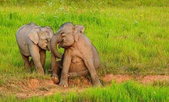 ✈ Sri Lanka: 3 to 5 Nights with Tours
